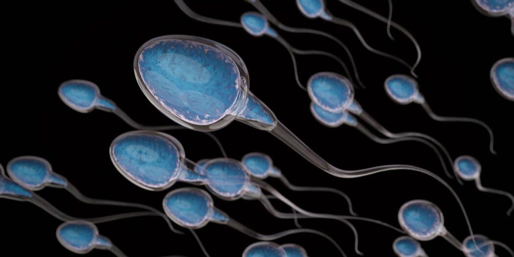 covid-19 fertilité masculine